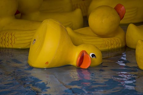 Dead-rubber-duck